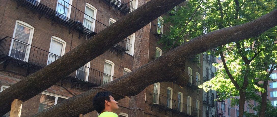 Tree Removal Bronx