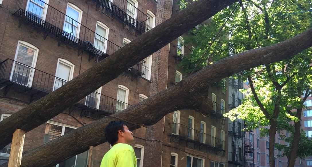 #1 Bronx Tree Company
