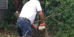 Tree Cutting Bronx