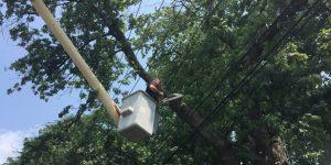 Tree Service Bronx
